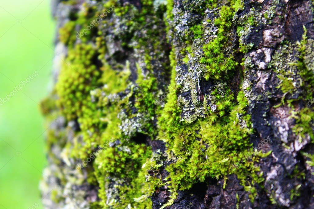Moss on the tree