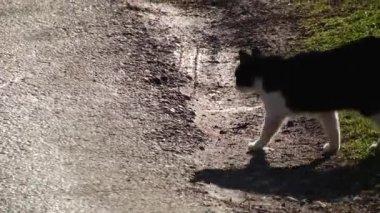 Gattino Bianco E Nero Si Siede Su Un Acciottolato Pavimentazione E
