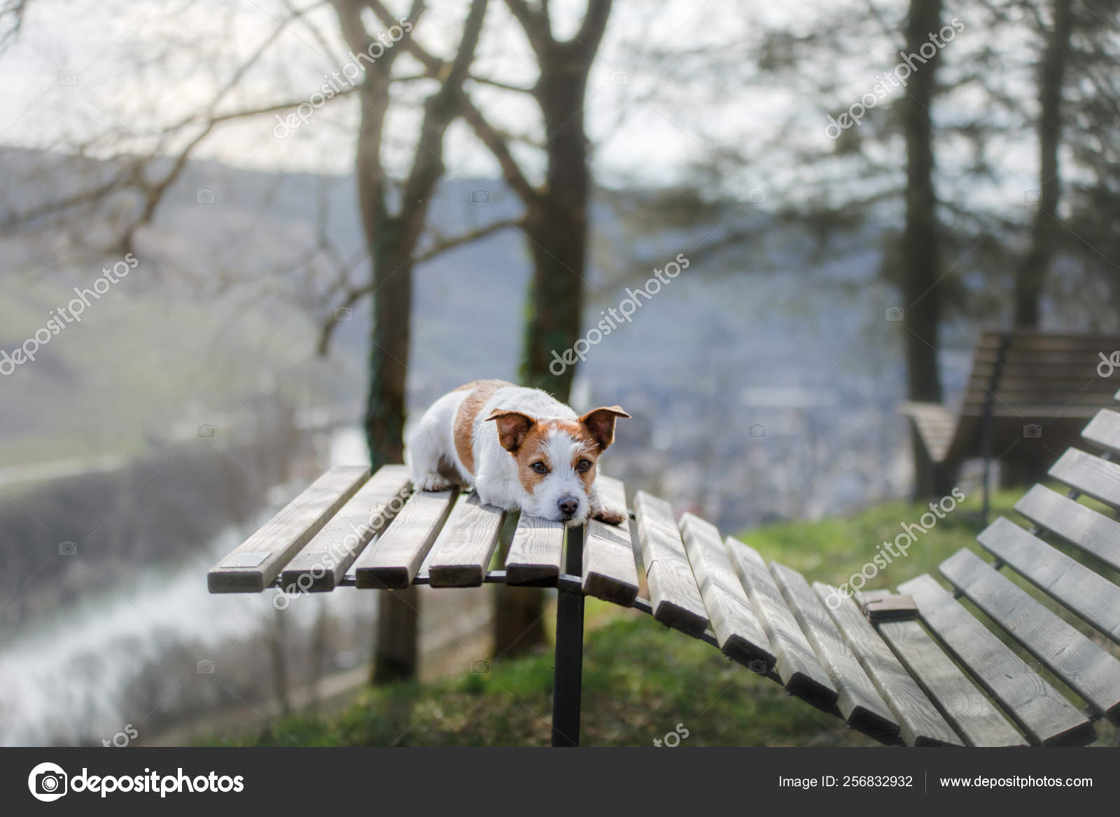 Marvelous A Small Dog Sits On A Bench And Looks Cute Jack Russell In Frankydiablos Diy Chair Ideas Frankydiabloscom