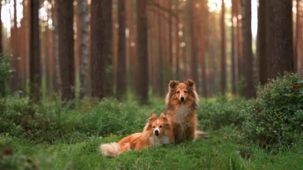 zwei Hunde zusammen im Wald. Unterstände liegen auf dem Moos.