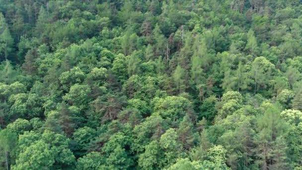 Anténa: létání nad smaragdově zelený Les lesy v jarní, birds eye pohled shora dolů