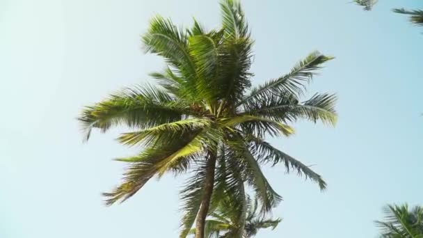 Palm Trees Moving In The Wind Against Bright Sky