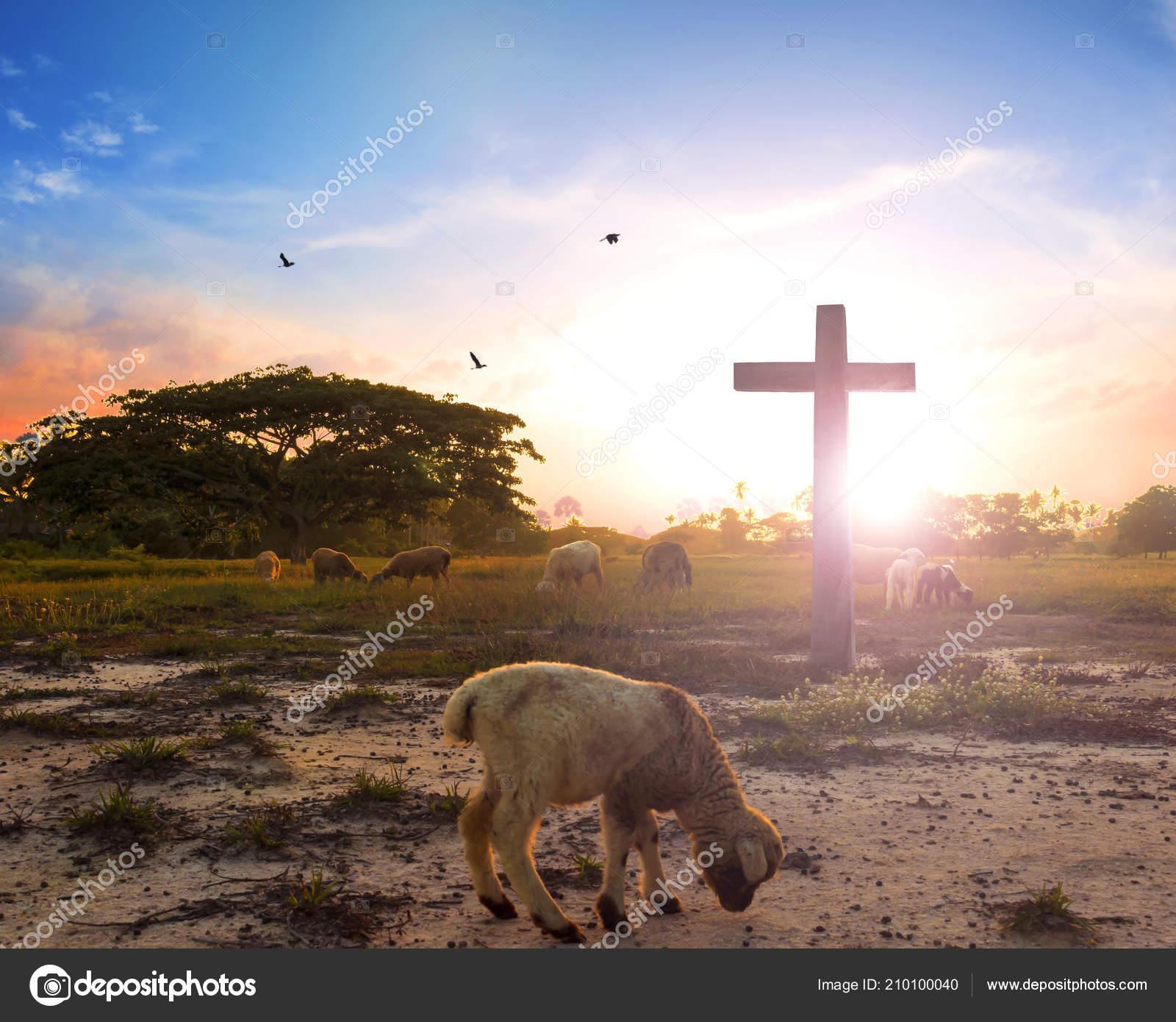 Lamb with cross picture | Resurrection Concept Lamb God Front Cross Christ  Jesus — Stock Photo © paulshuang #210100040