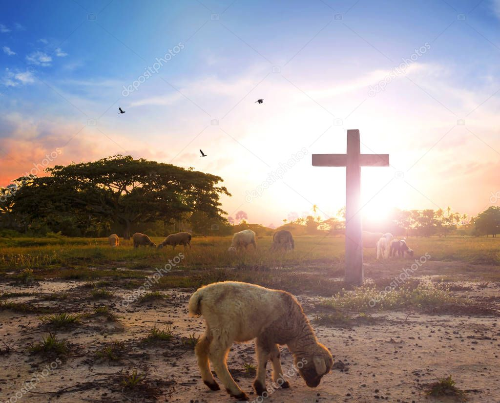 resurrection concept: the Lamb of God in front of the cross of Christ Jesus