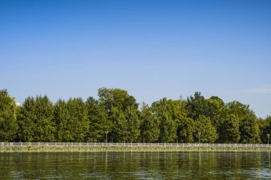 river embankment with trees