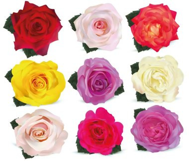 Collection roses on white background. Icon rose. Roses red, beige, purple, pink, white, coral, yellow, orange-yellow. 3d realistic roses close up. Beautiful of nine rose. Vector illustration.