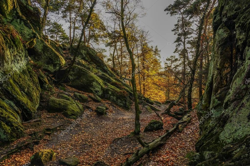 Teutoburger forest at autumn in Germany