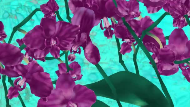 Orchids flowers opening and close pattern. Slow motion background.