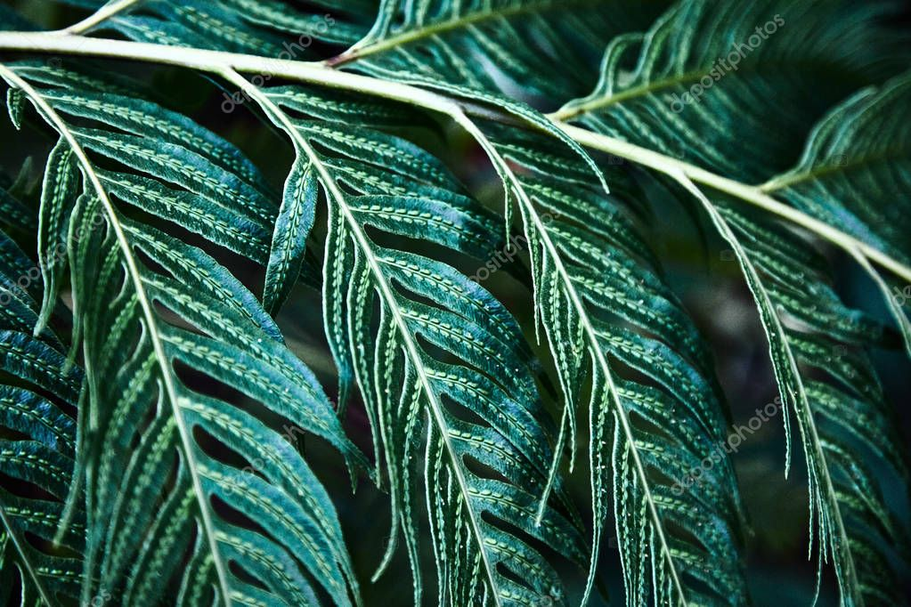 Green tropical leaves. Pattern. Close-up. Background. Plant leaves close-up. Botanical garden.