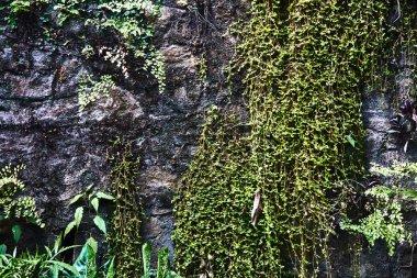 The bushes of nettles.