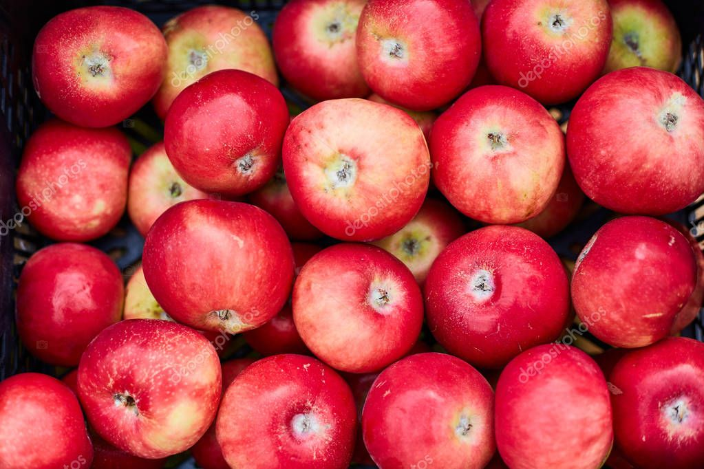 Common diseases of apple trees