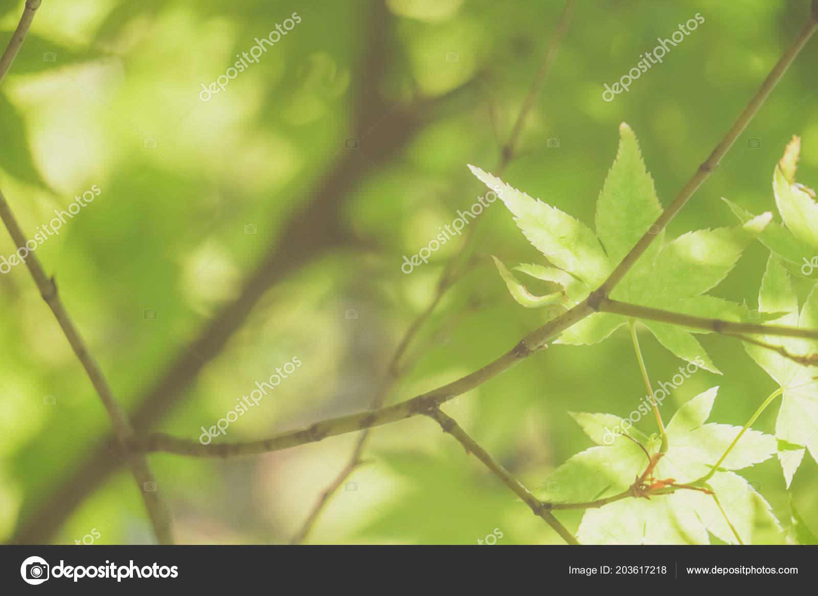 Mise Point Selective Frame Terminal Beaute Nature Verte Avec Fond