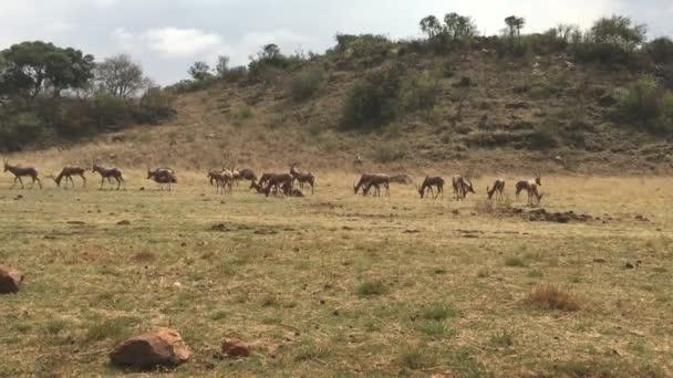 africa animals wilderness wildlife
