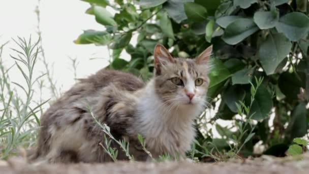 macska-macska, állat, kisállat ház-macska