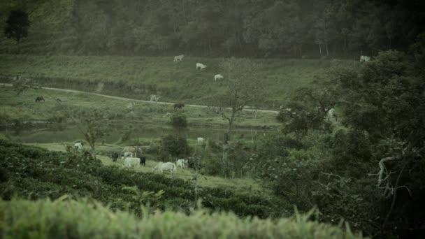 krávy pole zemědělství louka