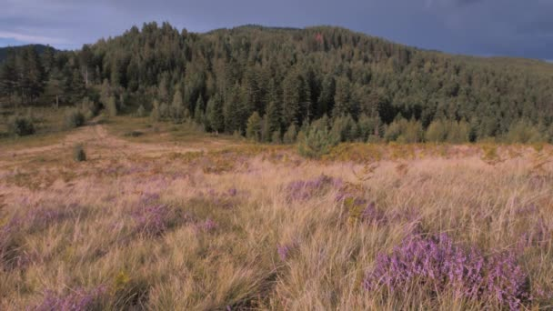 Summer mountain landscape. Summer in mountains. Green hills and mountains. Deciduous forests background. Meadow with grass and flowers with mixed forests on background. Field flowers, medical plants
