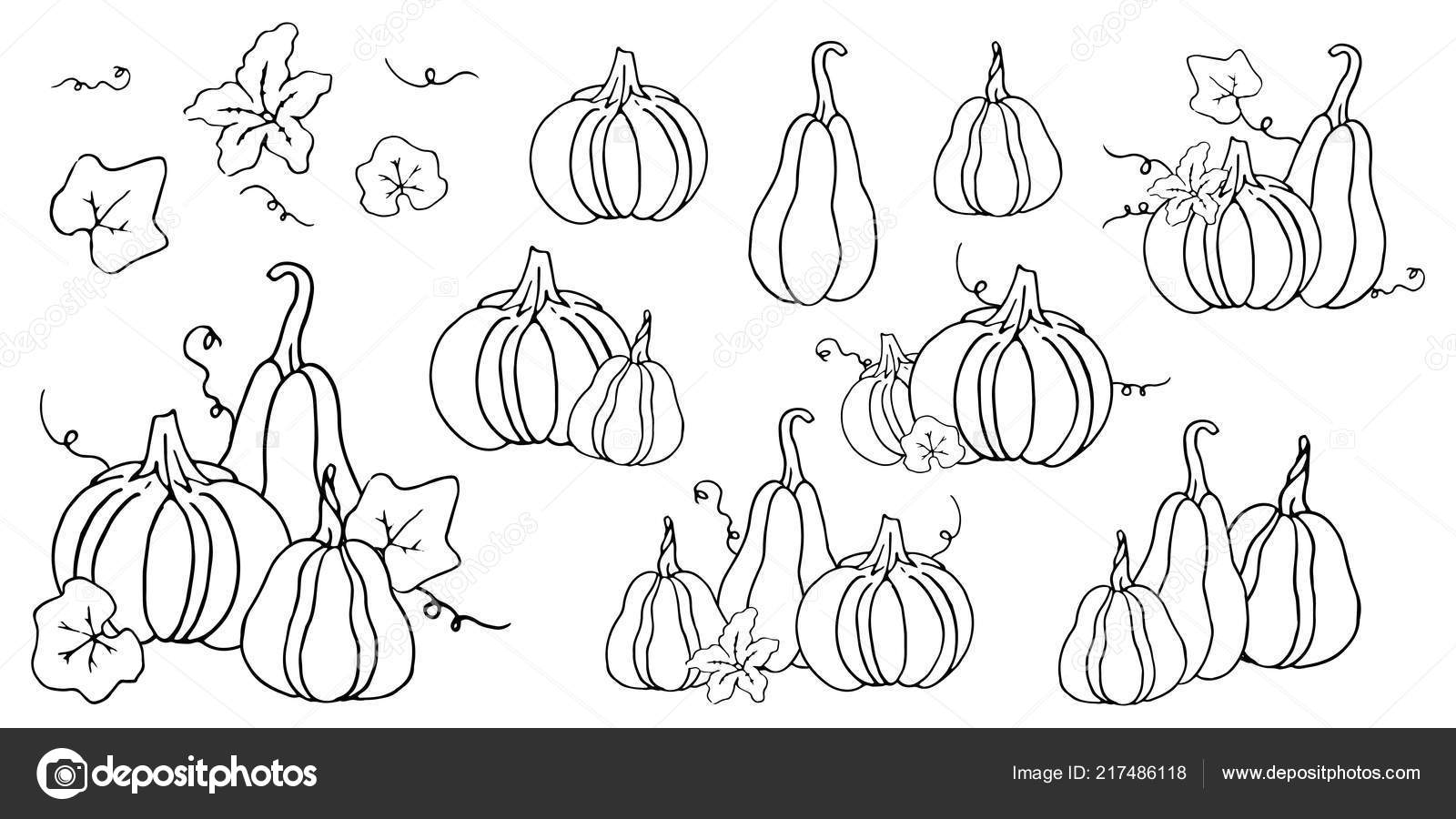 black white contour set pumpkins flower leaves templates collection
