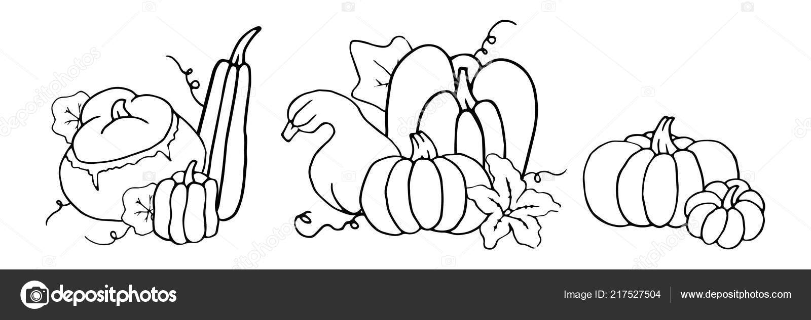 black white cartoon contour set pumpkins flower leaves templates