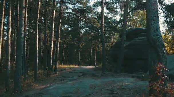 cesta v podzimním lese