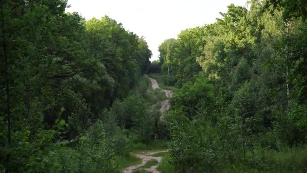Úzká silnice přes zelený háj. Úzká klikatá stezka procházející zelenými keři a stromy proti oblačenému nebi na venkově