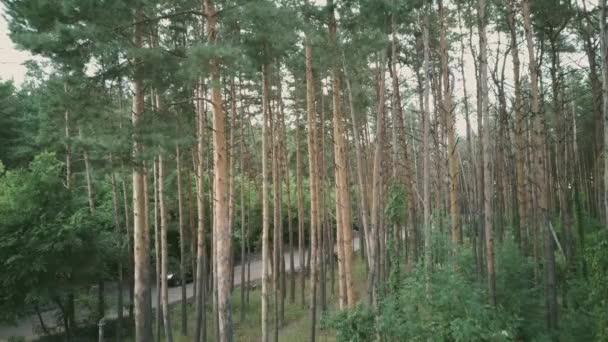 Auto jede po lesní cestě obklopené zelenými stromy