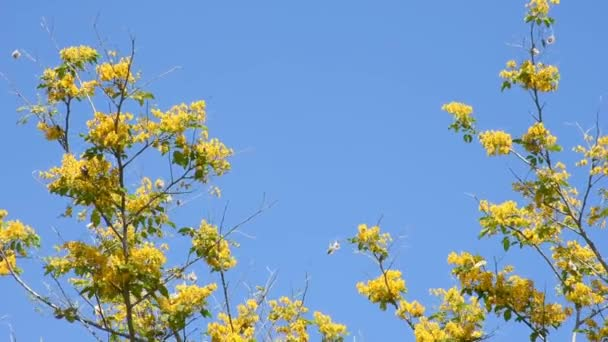 The yellow flowers are blooming with butterflies and insects flying  Background sky.