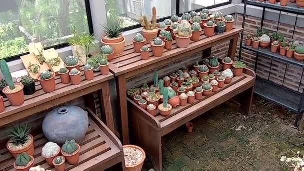 Kaktusy a mnoho malých stromů pro dekorativní rostliny pěstované ve skleníku.