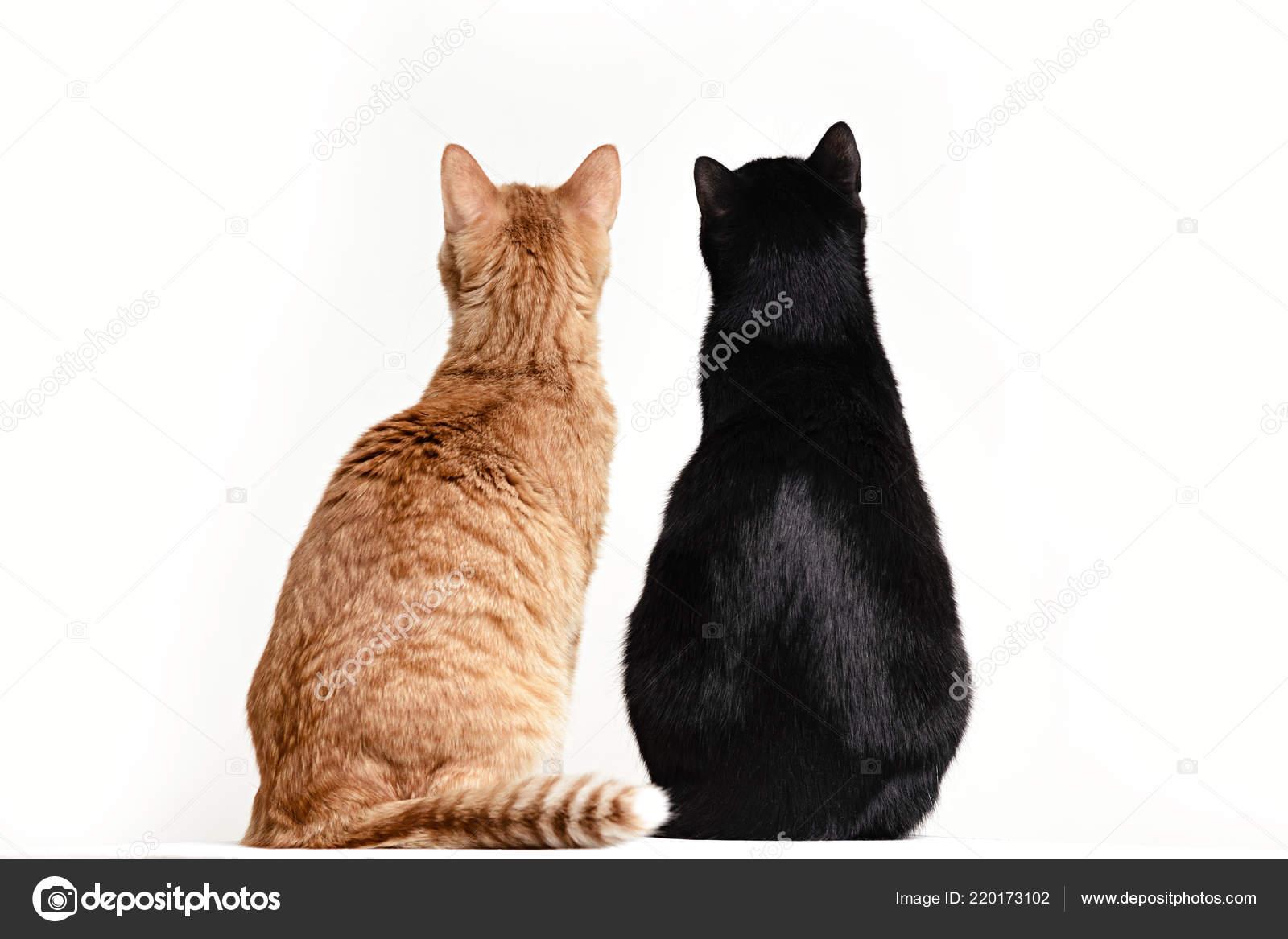 sladké černé kočičky
