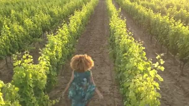 Lady pobíhají na vinici v západu slunce záběry z vinice v Provence, na jihu Francie ukazuje hroznů vinice.