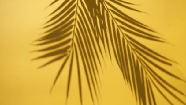 Shadow overlay. Shadows of tropical palm leaves and plants on a yellow clean wall in sunlight. Copy space