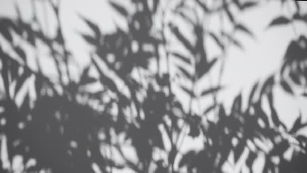 Árnyékfedő hatás. Növények és falevelek árnyékai fehér, tiszta falon.