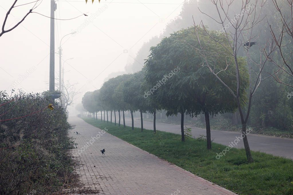 morning landscape in the fog. green trees in the fog