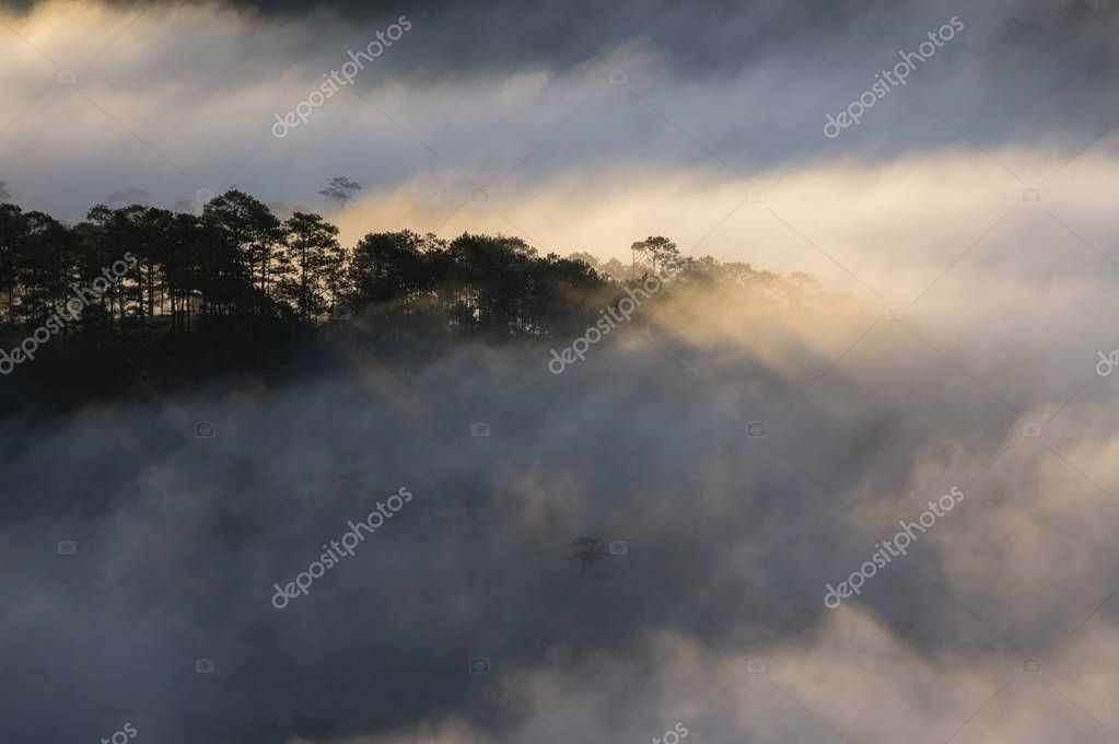Backgroud with fog cover pine forest and magic of the light, sunrays, artwork done elaborately, landscape and nature, Picture use for printing, advertising, travel magazines and more.