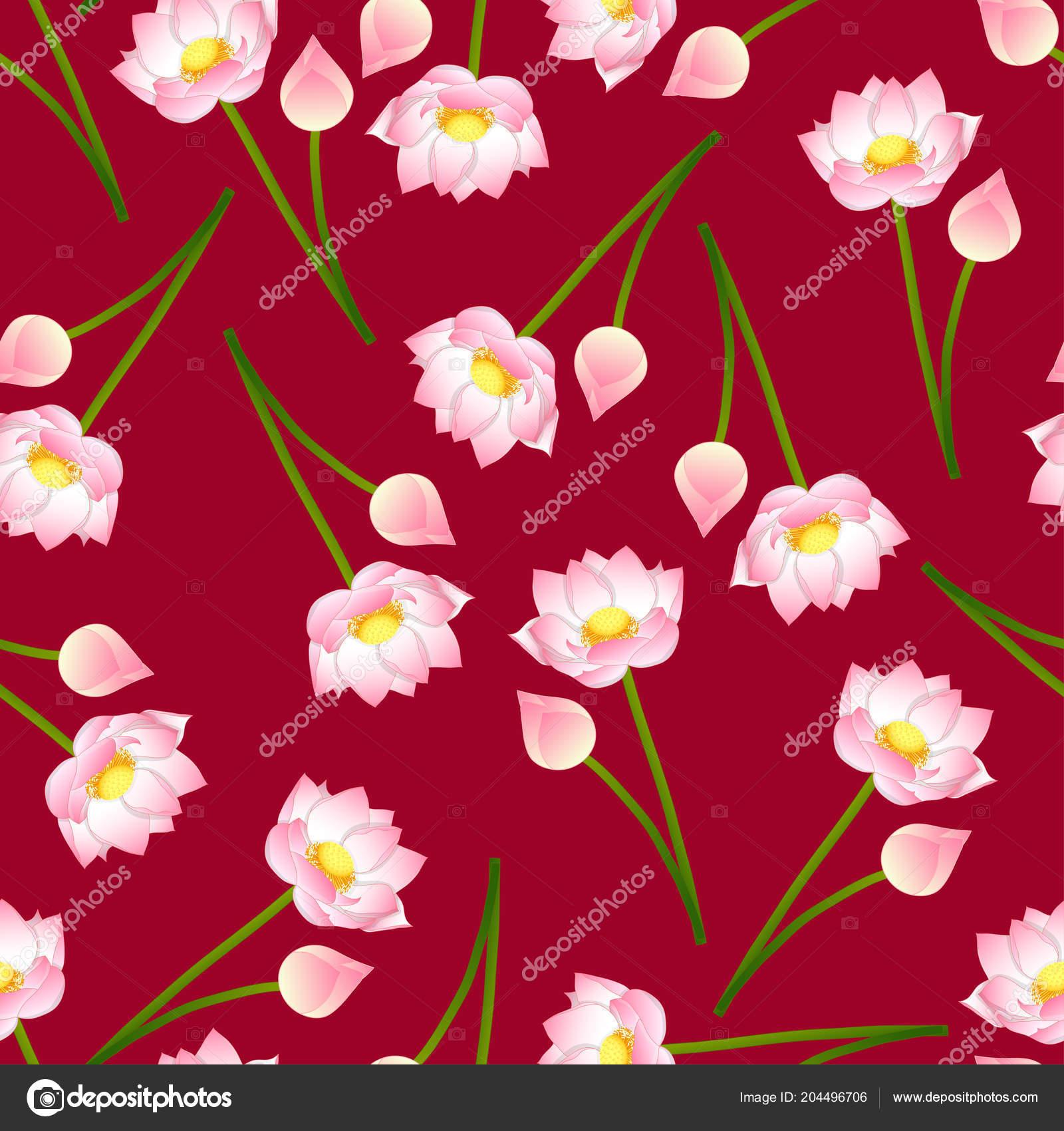 Pink Indian Lotus Red Background Nelumbo Nucifera Sacred Lotus Bean