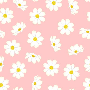 White Cosmos Flower on Pink Background. Vector Illustration.