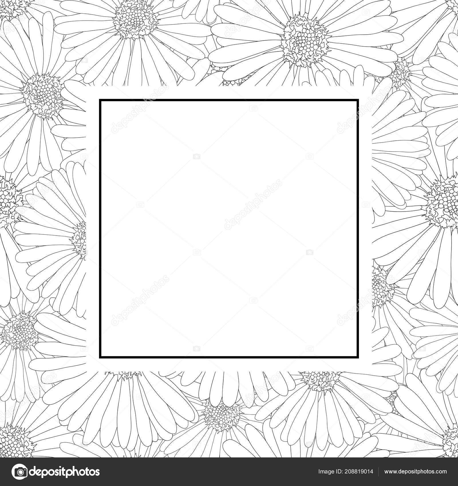 Aster daisy flower outline banner card border vector illustration aster daisy flower outline banner card border vector illustration stock vector izmirmasajfo