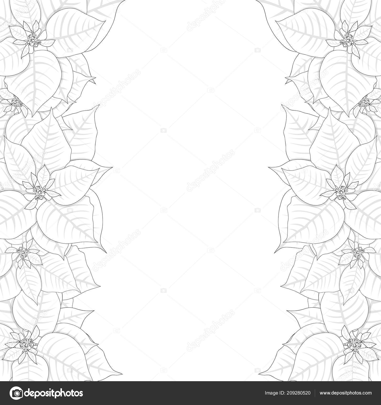 Poinsettia Outline Border Isolated White Background Vector ...