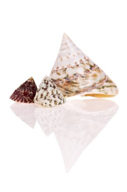 Top Shells isolated on white background