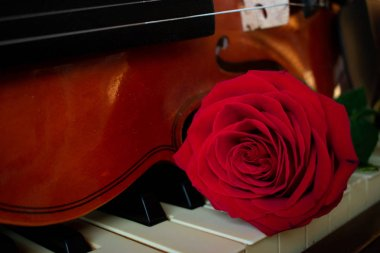 a red rose and violin on a piano