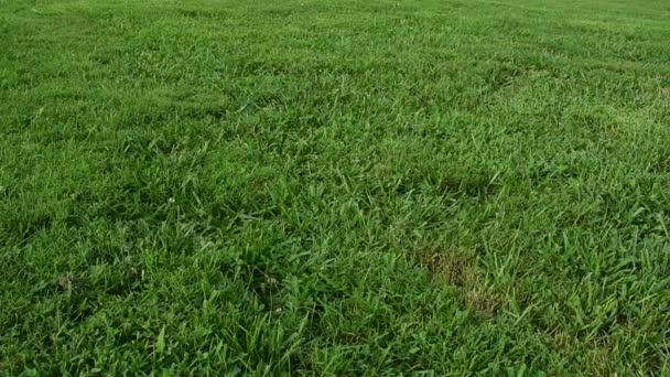 dívka v sukni a tenisová obuv procházející trávou