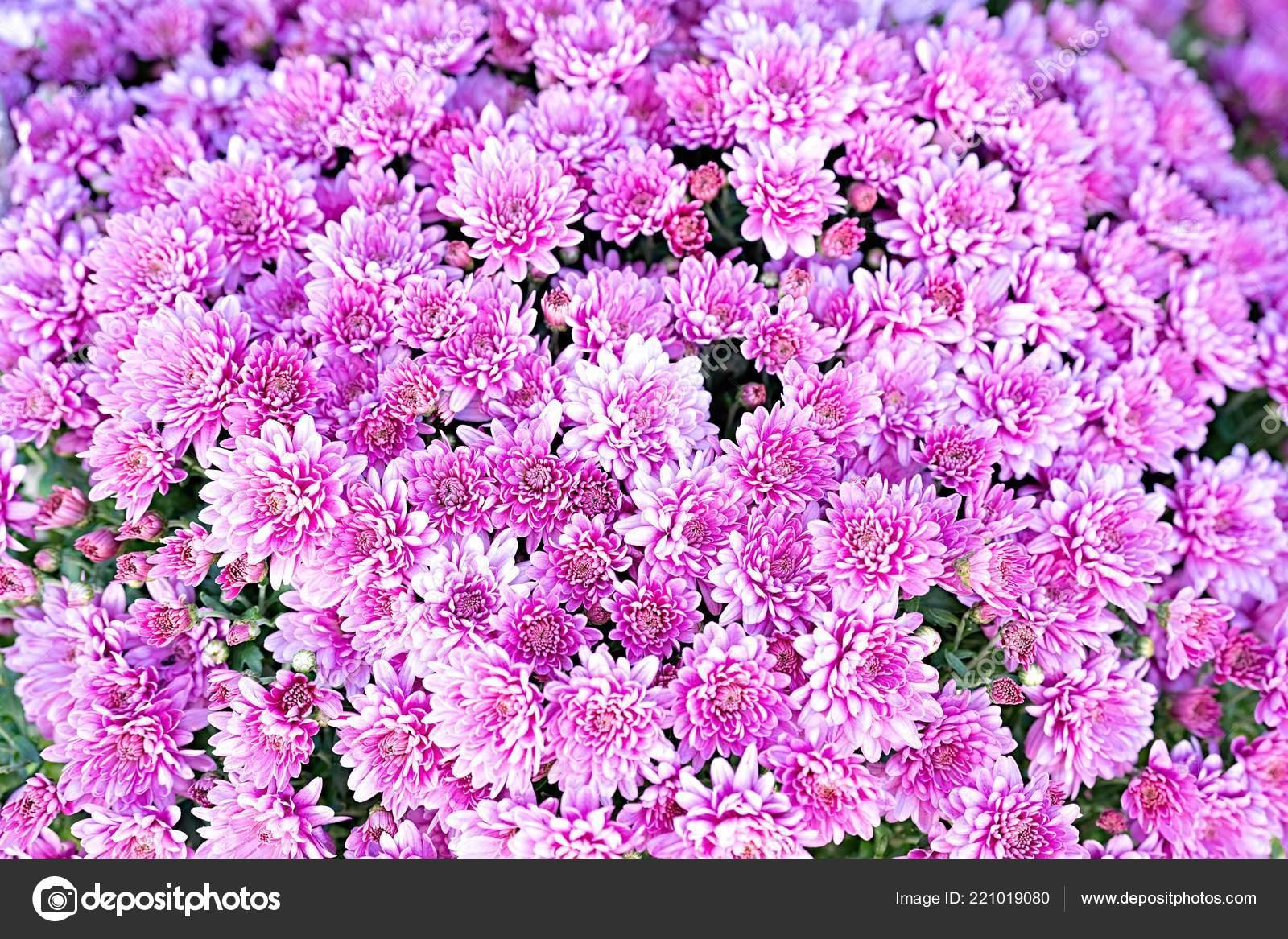 Fleurs Mur Fond Décoration Mariage Floral Background Jardinage Avec ...