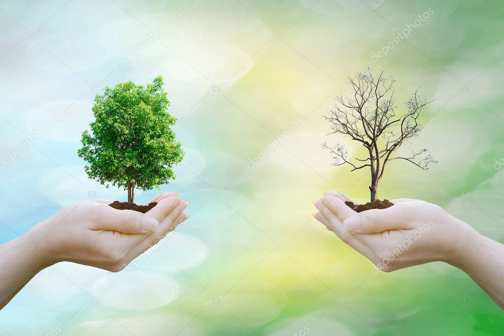 Ecology concept human hands holding big plant tree fresh and tree arid with world environment