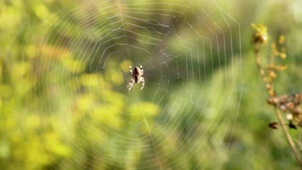 pavouk sedí na webu utkal mu mezi pobočkami v poli
