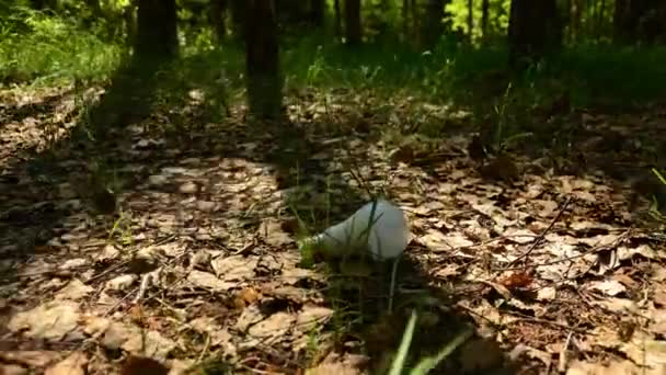 LED žárovky a žárovky koncepce ochrany přírody 36
