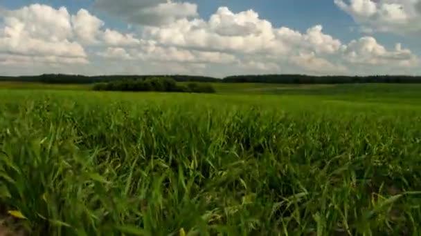 Mezőgazdasági területen. TimeLapse mezőgazdasági területen. 50