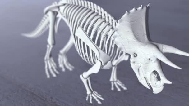 3D Render von Stegosaurus Skelett