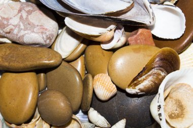 Texture of sea stones and seashells.Background with sea stones and shells.