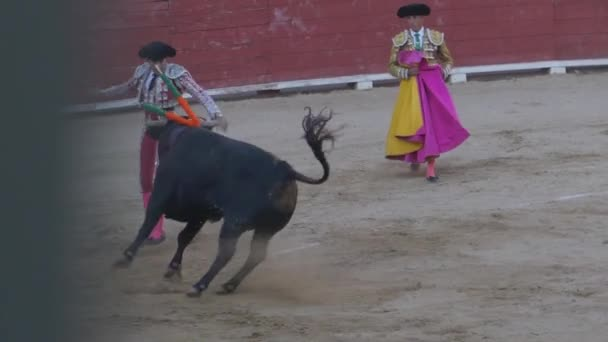 REQUENA, SPAIN - SEPTEMBER 2, 2017: Bullfighter, banderillero doing the job and nailing daggers to the bull