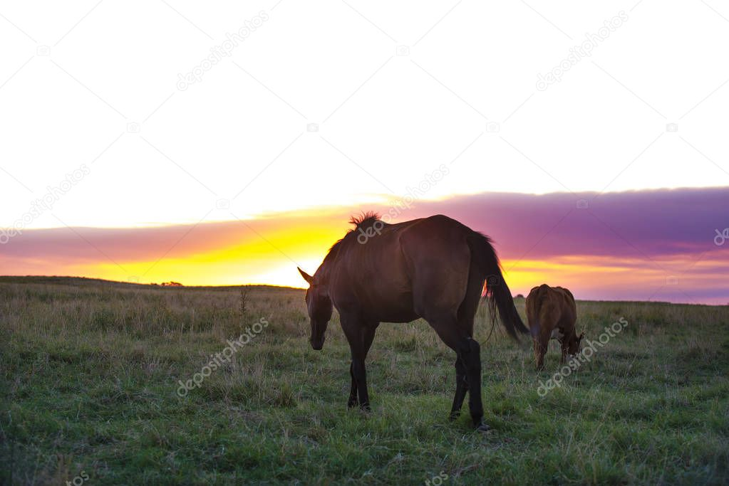 Horse grazing at countryside during sunset
