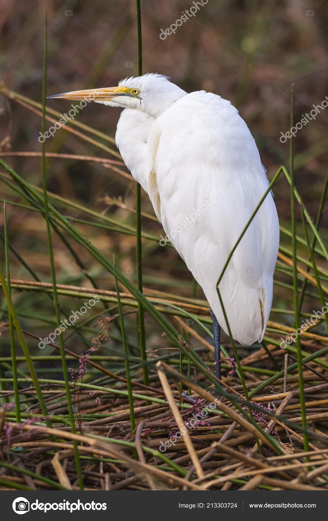 Www velký pták obrázky com